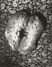 Wols Photographer. The Guarded Look | Martin-Gropius-Bau